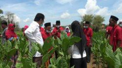 Anggaran DBHCHT Juga Dimanfaatkan untuk Sekolah Lapang Bagi Petani di Sumenep