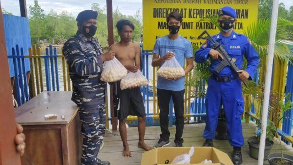Penyelundupan 903 Butir Telur Penyu Berhasil Digagalkan Petugas Gabungan TNI - Polri