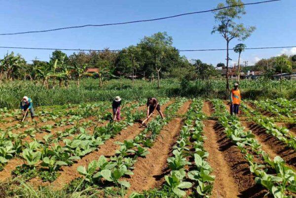 Pemerintah Kabupaten (Pemkab) Pamekasan, Jawa Timurtelah menganggarkan pembangunan infrastruktur jalan akses pertanian bersumber.