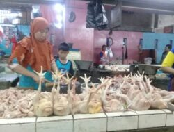 Sehari Jelang Idul Adha, Harga Ayam Kampung dan Ayam Potong Drastis Naik